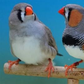 Promo Uccelli