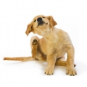 Antiparassitari & Beauty per cani