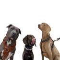 Promo Cani